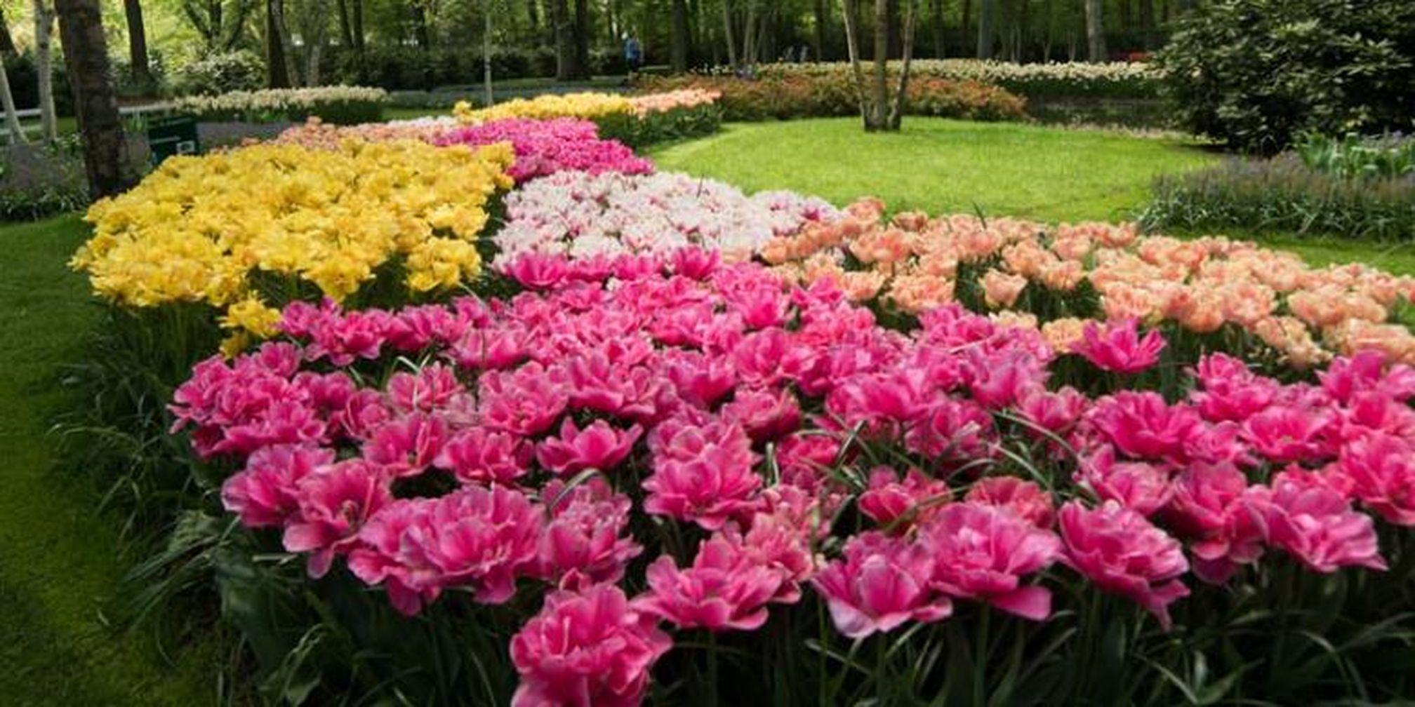 82 Gambar Taman Bunga Tulip Di Belanda Kekinian