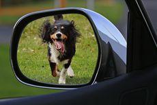 Tips dan Trik Sebelum Bepergian Jauh dengan Anjing