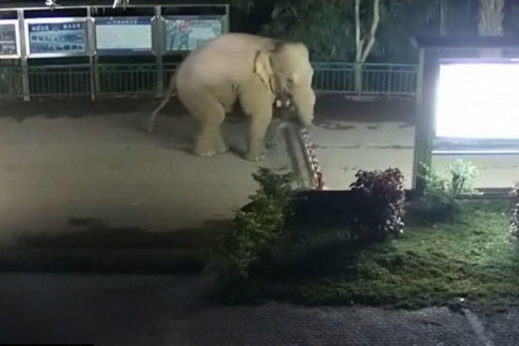 Dalam foto yang diambil dari video ini memperlihatkan saat-saat seekor gajah hendak melompati pagar di perbatasan China dan Laos di provinsi Yunnan.