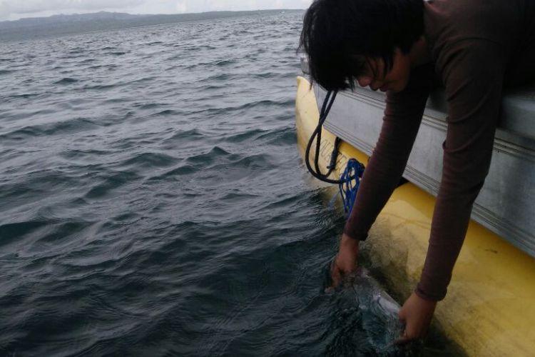 Enam ribu bibit lobstet dilepasliarkan di Bangsring Under Water Banyuwangi