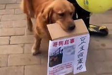 Viral Video Anjing Menangis Saat Mencari Sahabatnya yang Hilang Dicuri Orang