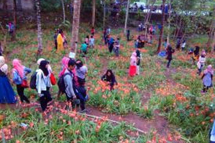 Taman bunga Amarylis di Desa Salam Kecamatan Patuk Gunungkidul dipenuhi pengunjung.