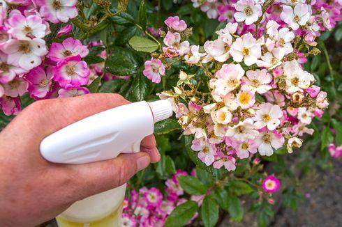 Cara Membuat Herbisida Alami yang Ramah Lingkungan untuk Basmi Gulma