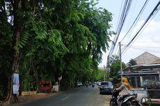 Bukan Prioritas, Pemangkasan Pohon di Permukiman Bekasi Tunggu Aduan Warga