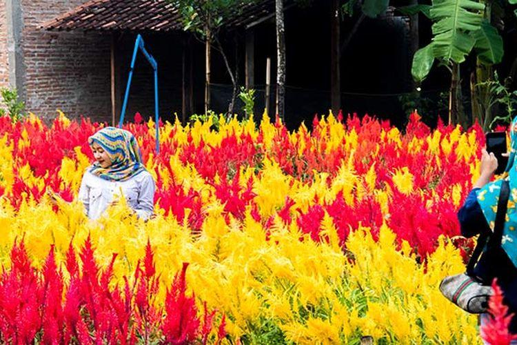 Pengunjung sedang berfoto di Taman Bunga Kebon Asri, Klaten