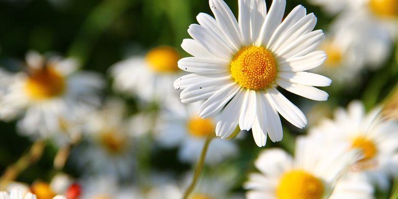 Bagian Dan Fungsi Bunga Pada Tumbuhan Halaman All Kompas Com
