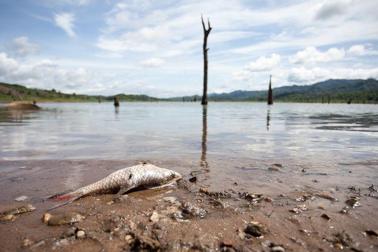Ilustrasi ikan mati di sungai.