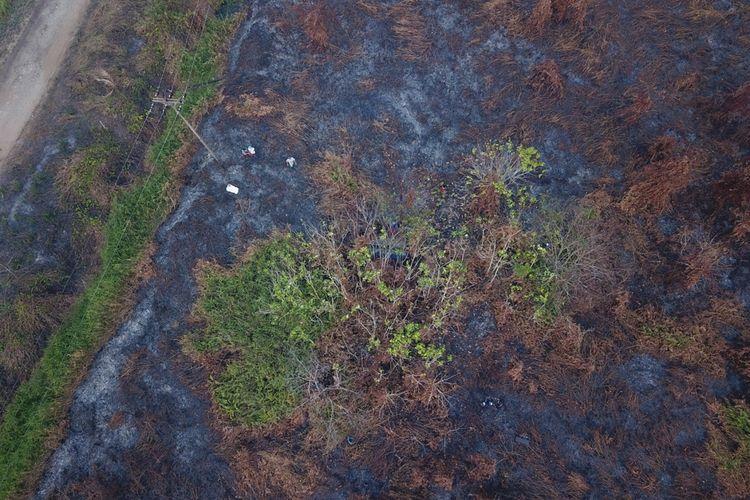 BKSDA Kalbar bersama IAR Indonesia menyelamatkan 2 individu orangutan yang jadi korban kebakaran hutan dan lahan di Ketapang, Kalimantan Barat.