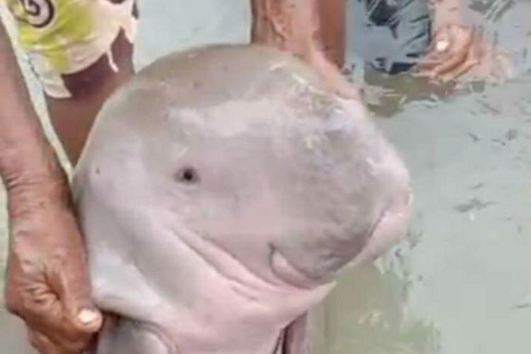 Seekor anak dugong ditemukan terjerat jaring nelayan di pantai Desa Sathean, Kabupaten Maluku Tenggara, Kamis (17/12/2020)