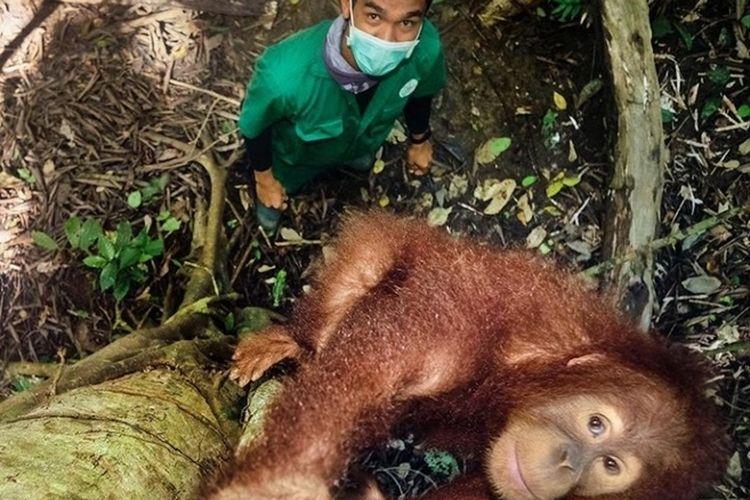 Tangkapan layar dari unggahan di akun @leonardodicaprio tentang dukungan terhadap pengumpulan dana untuk perlindungan orangutan dari penyebaran Covid-19 yang dibuat oleh SOCP.