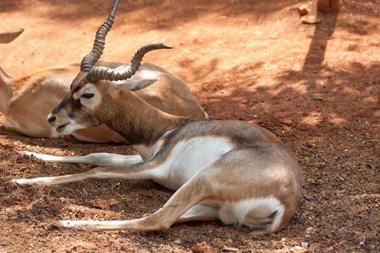 Maharani Zoo & Goa di Jawa Timur.