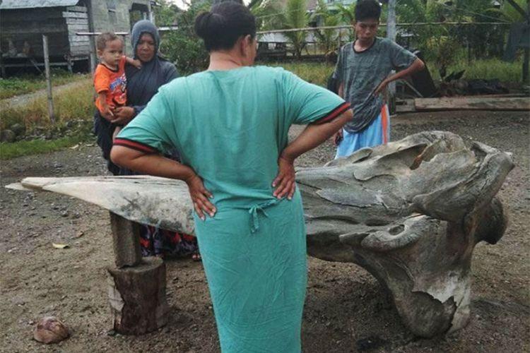Warga Desa Siwalempu memperhatikan potongan tulang raksasa yang didapat di Pantai Salipang. Tulang misterius ini tertanam di pasir pantai, dibutuhkan ekskavator untuk mengeluarkannya.
