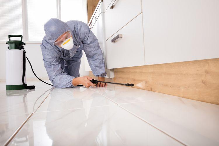 Jauhkan Furnitur dan Bagian Rumah yang Berkayu Dari Rayap