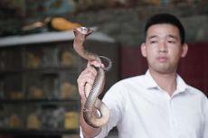 Restoran Ular Paling Populer di Vietnam, Berani Coba?