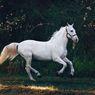 5 Ras Kuda Terindah di Dunia