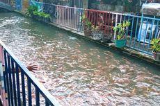 Unik, Kampung Dukuh Yogyakarta Punya Irigasi Bersih Penuh Ikan Seperti di Jepang