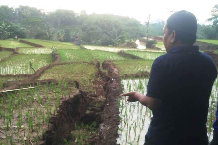 Seorang warga di Kabupandak, Kabupaten Cianjur, Jawa Barat memerlihatkan kondisi areal pesawahan yang terbelah akibat pergerakan tanah sepanjang 200 meter.