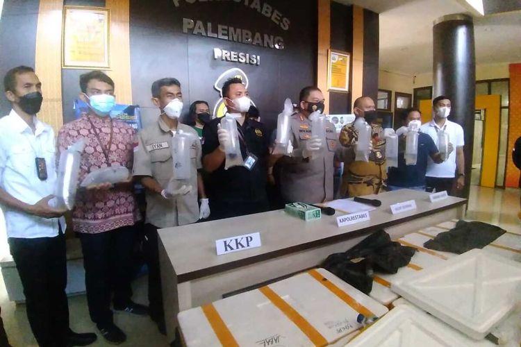 Kapolrestabes Palembang Kombes Pol Irvan Prawira menunjukkan barang bukti baby lobester atau benur sebanyak 91.456 ekor senilai Rp 14 miliar yang hendak diselundupkan dari Lampung ke Jambi, Jumat (10/9/2021).