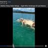 Heboh Bangkai Gajah Mina di Laut Natuna, Ini Penjelasan Peneliti LIPI