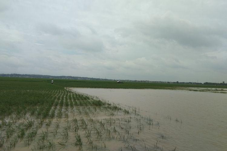 Sawah di Desa Karangligar, Kecamatan Telukjambe Barat, Kabupaten Karawangnterandam banjir.