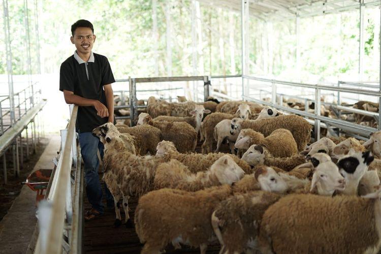 DD Farm Lampung berdayakan pemuda putus sekolah untuk mengelola sentra ternak, Pringsewu, Lampung, beberapa waktu lalu. Sentra ternak tersebut sebagai upaya pemberdayaan masyarakat sekaligus pemasok hewan program Tebar Hewan Kurban Dompet Dhuafa.