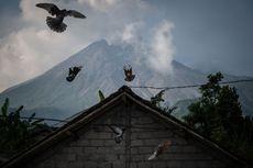 Kondisi Terkini Gunung Merapi, Titik Longsoran Baru dan Intensitas Gempa Guguran