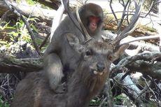 Seks Tak Masuk Akal antara Monyet dan Rusa Rupanya Umum, Kok Bisa?