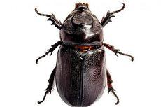 Mahasiswa ITS Gagas Kumbang