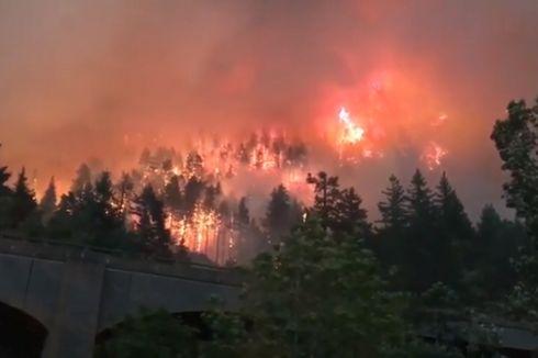Sebabkan Kebakaran Hutan, Seorang Remaja Didenda Rp 508 Miliar