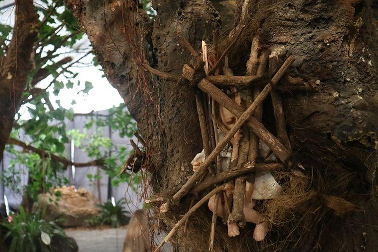 Makam bayi Kambira di Tana Toraja, jelasah  bayi dimasukan kedalam pohon tarra.