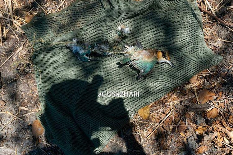 Bangkai burung dilindungi yang ditemukan komunitas fotografer di hutan Mangrove Surabaya.