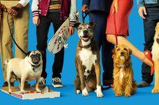 Sinopsis Dog Days, Kisah Cinta dan Anjing Kesayangan