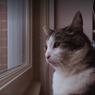 Sinopsis Kitty Love: An Homage to Cats, Dokumenter tentang Kucing Abatutu
