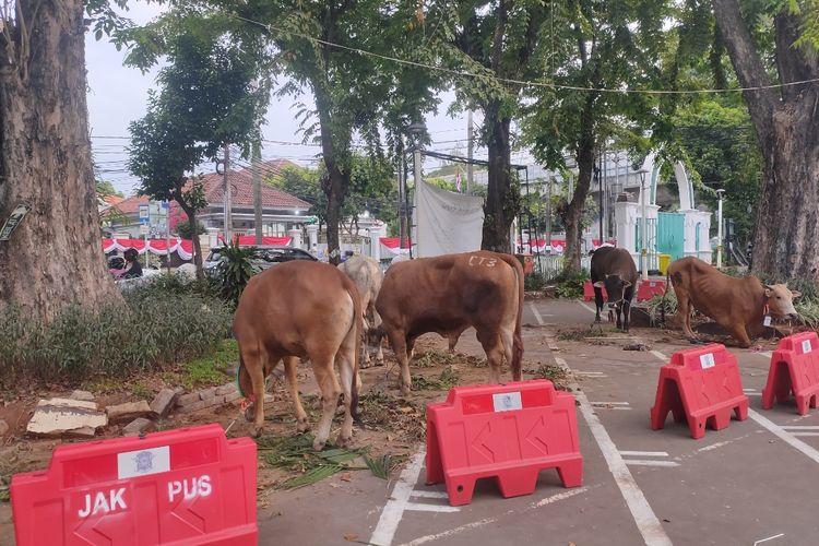 Sejumlah hewan kurban di halaman Masjid Cut Meutia, Menteng, Jakarta Pusat, Jumat (31/7/2020)