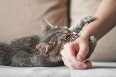 Gejala dan Cara Mengobati Infeksi akibat Gigitan Kucing