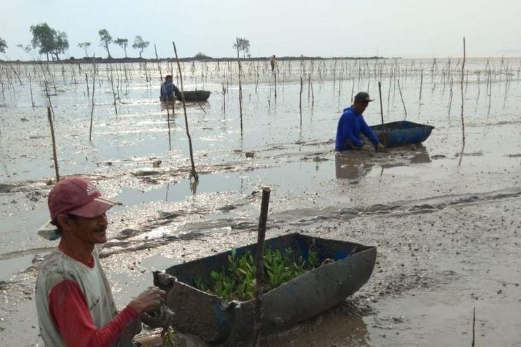 Kegiatan Penanaman Bibit Mangrove oleh Masyarakat di Kepulauan Bangka Belitung.