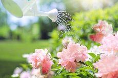 Menyiram Tanaman dengan Air Garam, Air Gula, dan Air Ledeng, Baguskah?