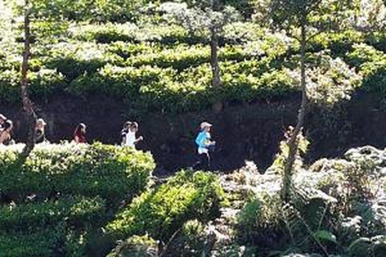 Menikmati sinar matahari di antara rerimbunan pohon teh.