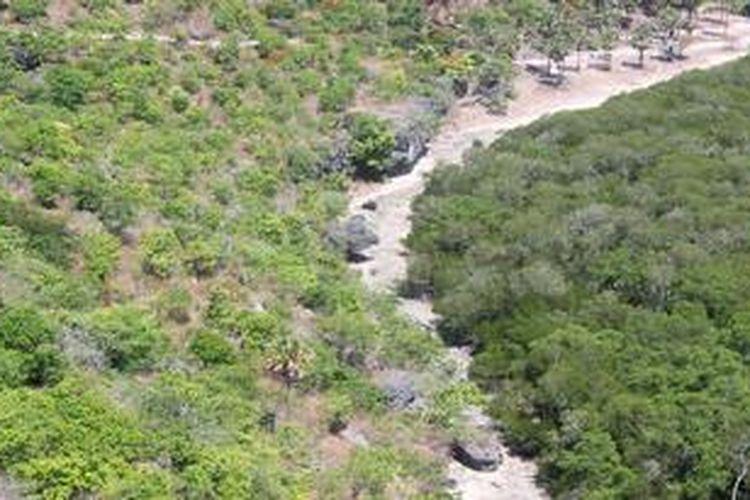 Tampak garis batas yang tegas antara hutan bakau di pantai dan pohon lontar di pesisir sebagai upaya mengamankan pulau Rote dari gelombang tinggi. Lautan Samudera Hindia, Laut Timor dan Laut Sawu mengelilingi pulau kecil itu, beresiko bagi keberadaan pulau ke depan.
