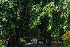 Musim Hujan, Pemkot Bekasi Pangkas Pohon Raksasa di Jalan Utama