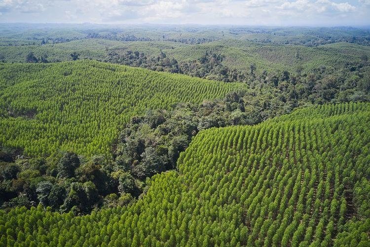 Pengelolaan hutan dengan pendekatan proteksi-produksi di Grup APRIL