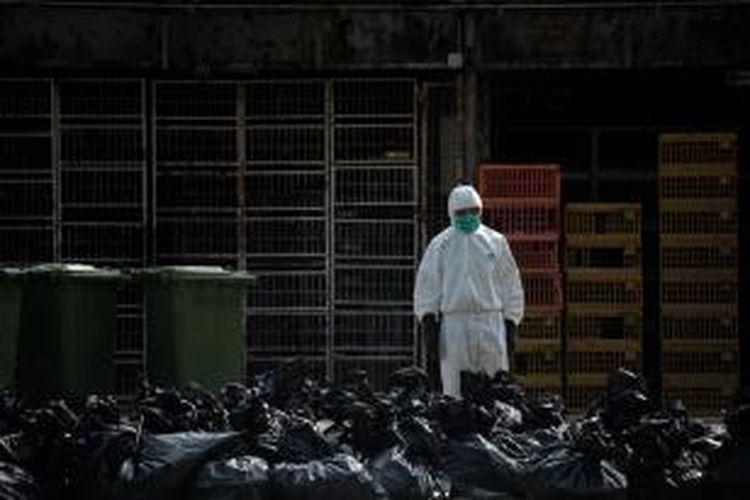 Seorang petugas pemerintah Hongkong mengenakan pakaian pengaman menyaksikan tumpukan kantung plastik berisi bangkai ayam yang dimusnahkan akibat ditemukannya virus flu burung H7N9 dalam tubuh ayam yang diimpor dari China.