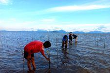 Sejumlah Upaya BRGM untuk Restorasi Gambut dan Mangrove di Indonesia