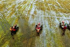 Berkat Optimalisasi Lahan Rawa, Luas Tanam Padi di Banjar Meningkat 5 Kali Lipat