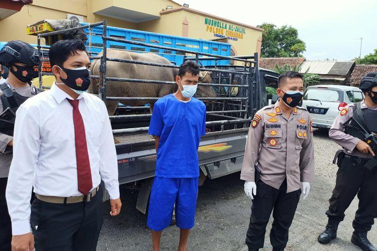 Pelaku pencurian hewan ternak diamankan Polsek Ciwandan