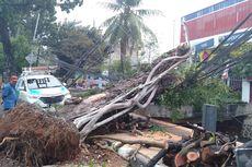 Masuk Musim Hujan, Pemkot Jakpus Pangkas 9.302 Pohon di 8 Kecamatan