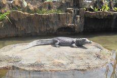 Predator Fun Park, Alternatif Wisata Baru di Kota Batu