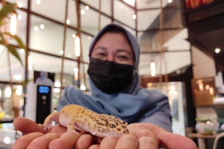 Pengunjung sedang memegang hewan reptil yang tersedia di KOHI 91 di Jalan Taruma No.9B, Petisah Tengah, Kecamatan Medan Petisah, Kota Medan, Sumatera Utara, Minggu (22/8/2021).