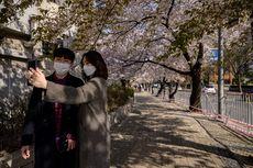 Cara Orang Korea Nikmati Sakura di Tengah Pandemi Corona, Ada Wisata Drive-thru