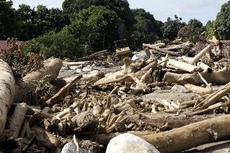 Hari Ini dalam Sejarah: Bencana Banjir Bandang Wasior, Papua Barat, 150 Orang Meninggal Dunia